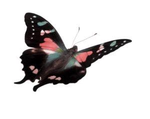 butterflyj0314072