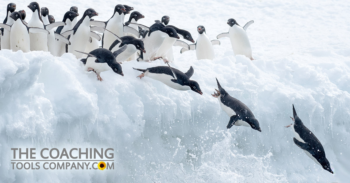 Penguins Diving into Sea representing Diving Back into Goal-Setting