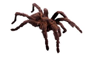 Types of Fears represented by a tarantula spider